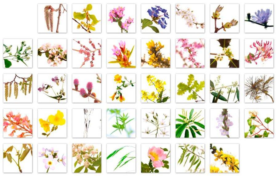 Conheça as 38 essências florais de bach e suas aplicações para as enfermidades humanas
