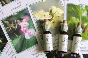 Terapia floral e vibracional e Canoas RS