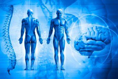 Curso De Balanceamento Muscular