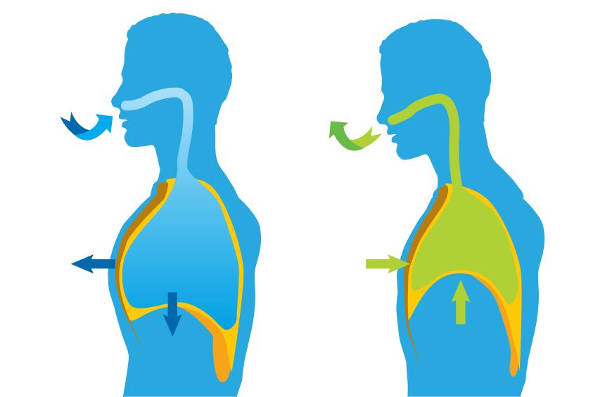 Técnicas de respiração abdominal para controlar a ansiedade 1